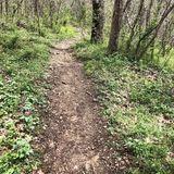 Creation Walk – June 8